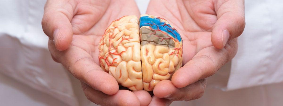 cerebro-en-manos